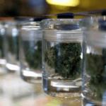 jakość marihuany