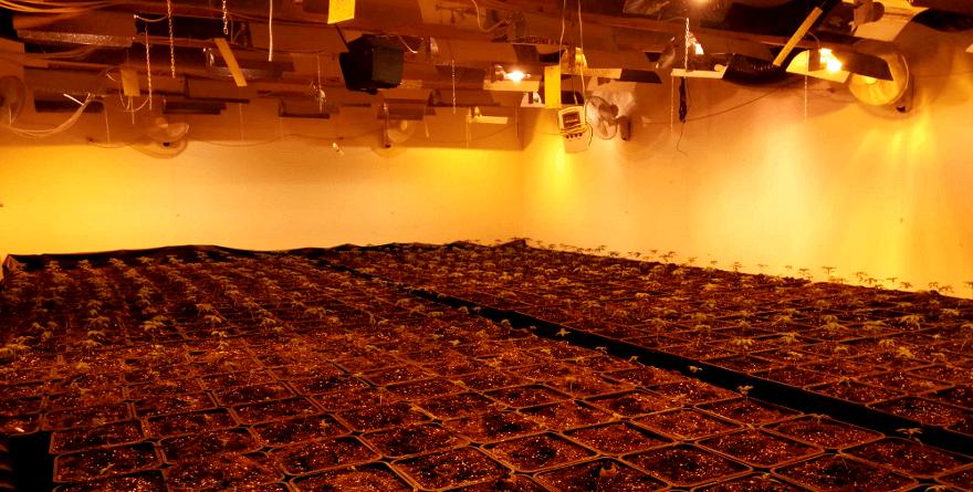 Plantacja w Pruszkowie