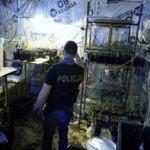 policjant i uprawa