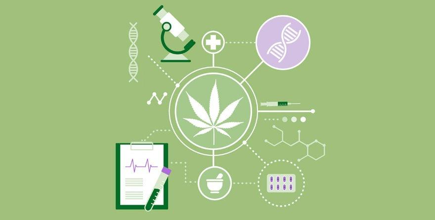 badania nad marihuaną