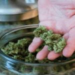 Marihuana w słoiku