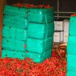 Marihuana ukryta w transporcie papryczek jalapeno