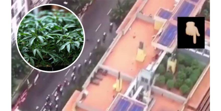 planatacja marihuany vuelta e espana