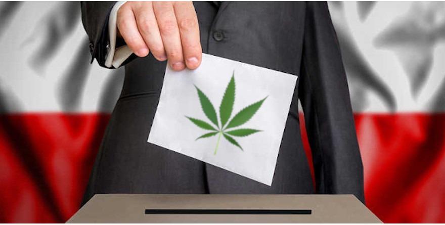 wybory marihuana