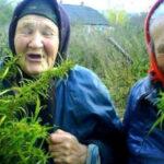 Babcie z marihuaną