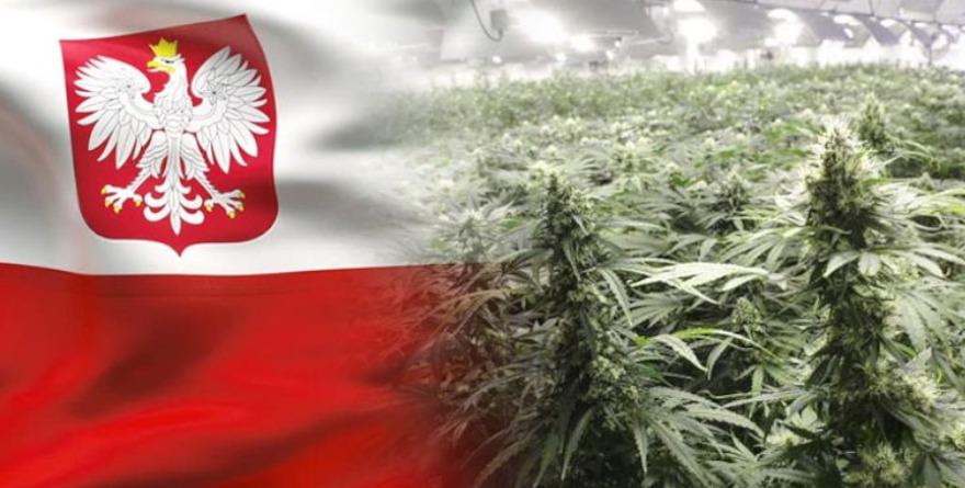 Polska konopna
